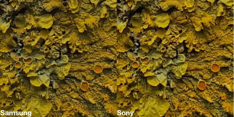 Galaxy S6 comparatif Macro