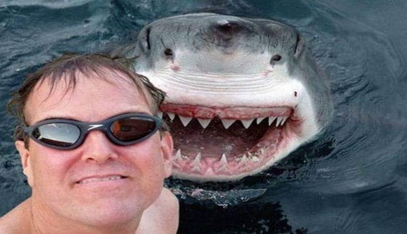 selfie requin