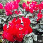 photo fleur moto x style