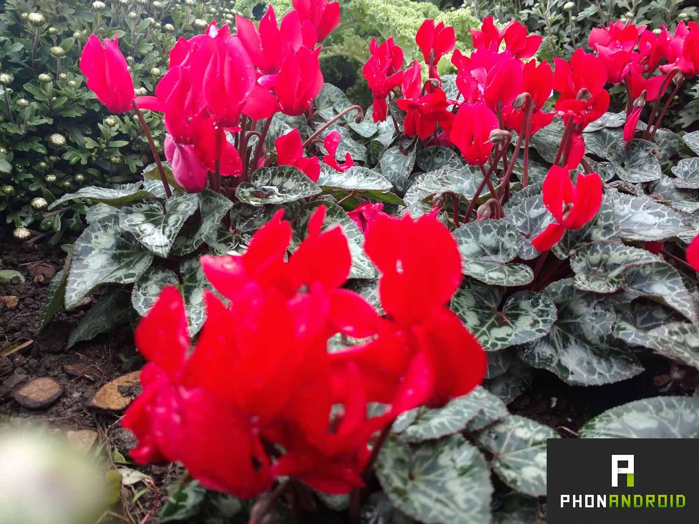 fleurs-arriere-plan