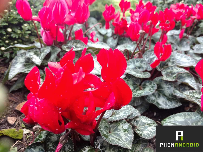 fleurs-premier-plan