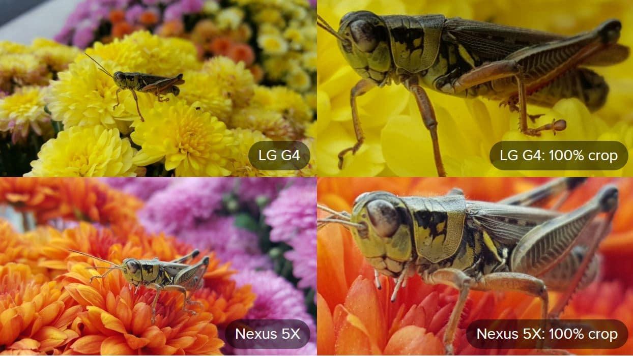 macro nexus 5X