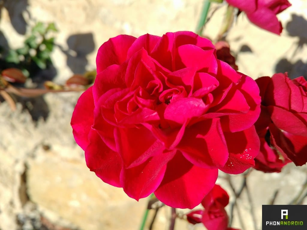 blackberry priv photo macro