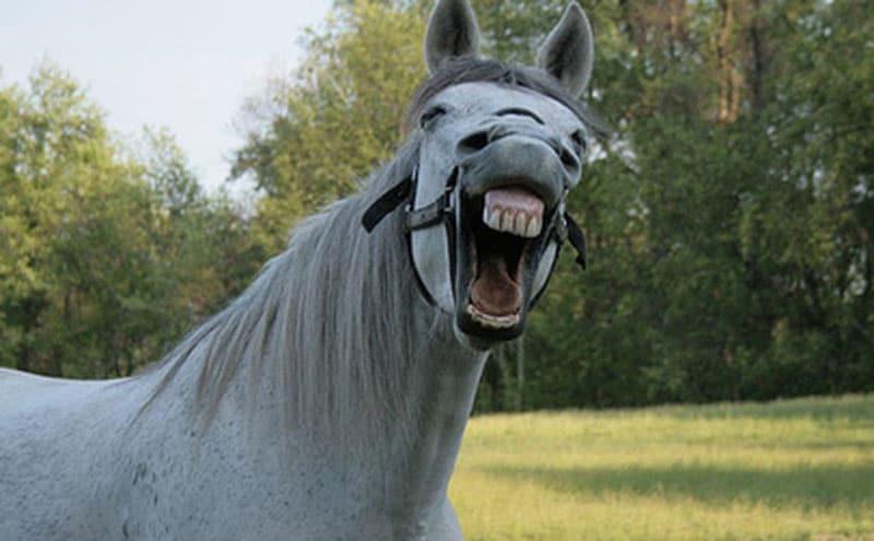 street view cheval chute hilarante