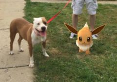 pokemon go refuge