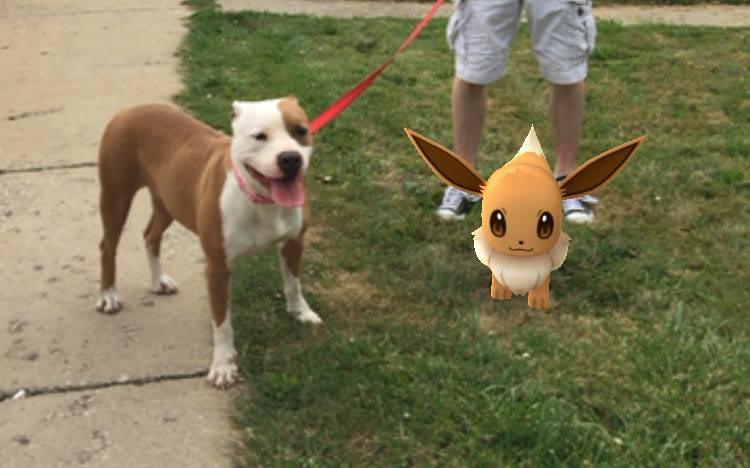 pokemon-go-refuge
