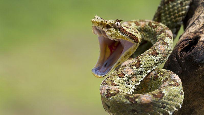 selfie python