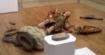 Un touriste détruit une statue du 18ème dans un musée en voulant prendre un selfie