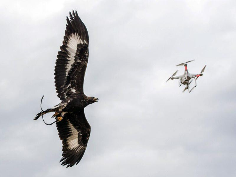 armee-drone-aigles