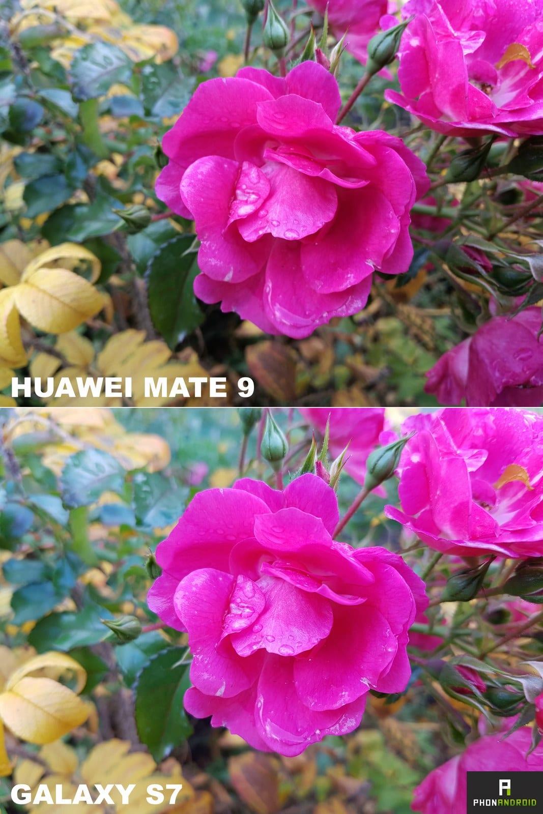 huawei mate 9 galaxy s7 photo macro