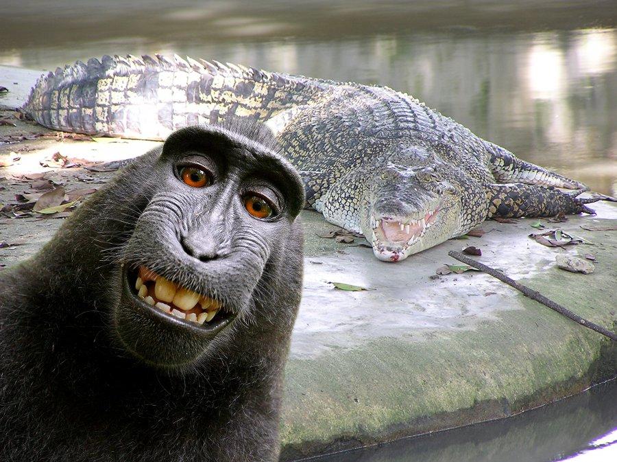 touriste crocodile selfie