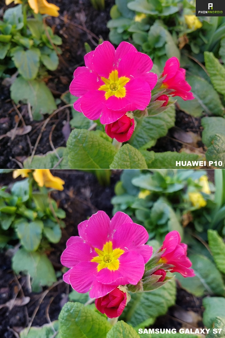 test huawei p10 photo vs galaxy s7 macro
