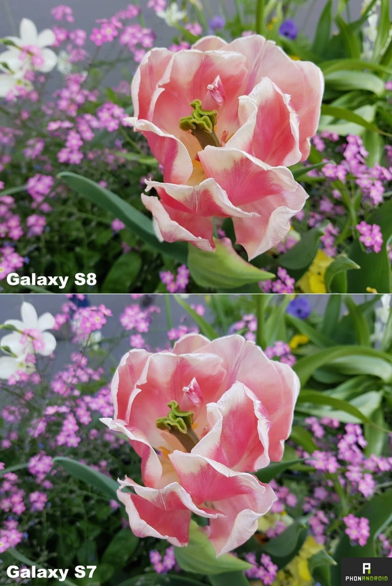 samsung galaxy s8 vs S7 photo macro