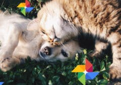 google photos chat chien