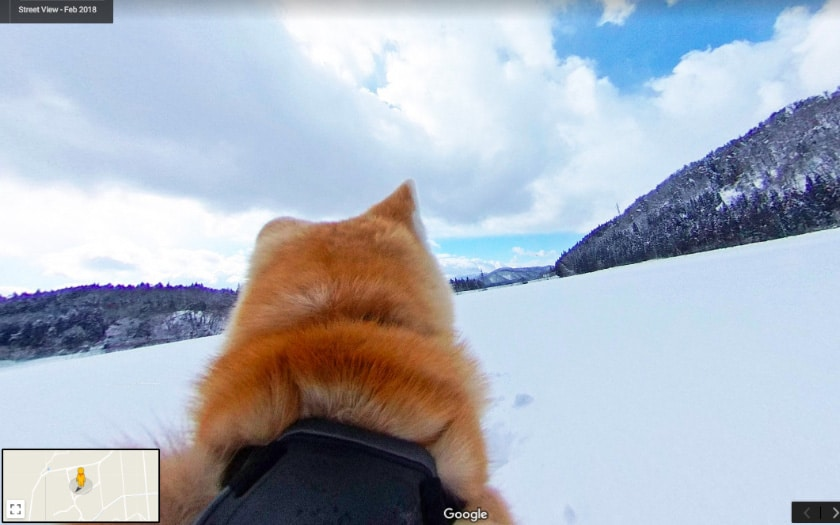 google dog view
