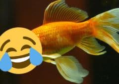 poisson avril 2019 blagues google oneplus free