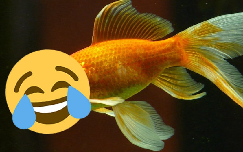 poisson avril 2019 blagues google oneplus free - poisson fortnite
