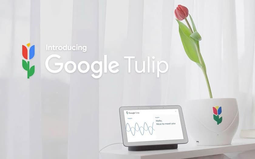 poisson avril google tulip