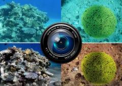 algorithme photo sous eau