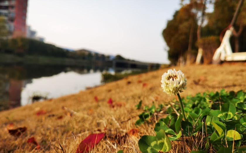 huawei p40 pro photos prises