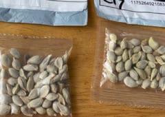 amazon arnaque graines chinoises sème vent panique